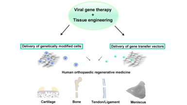 Current Trends in Viral Gene Therapy for Human Orthopaedic